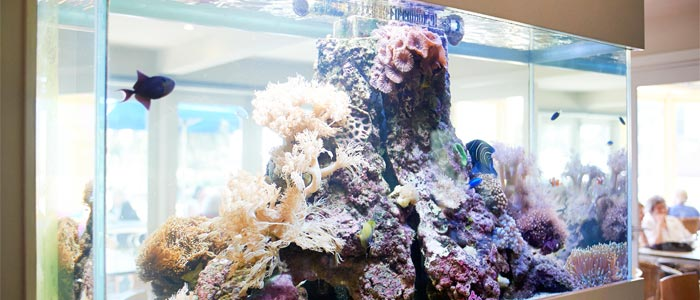 Fish Tank Feature